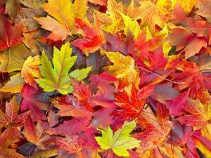 fall leaves image